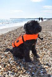 Typhoon Totland Dog Buoyancy Aid -  Orange/Black - Full View